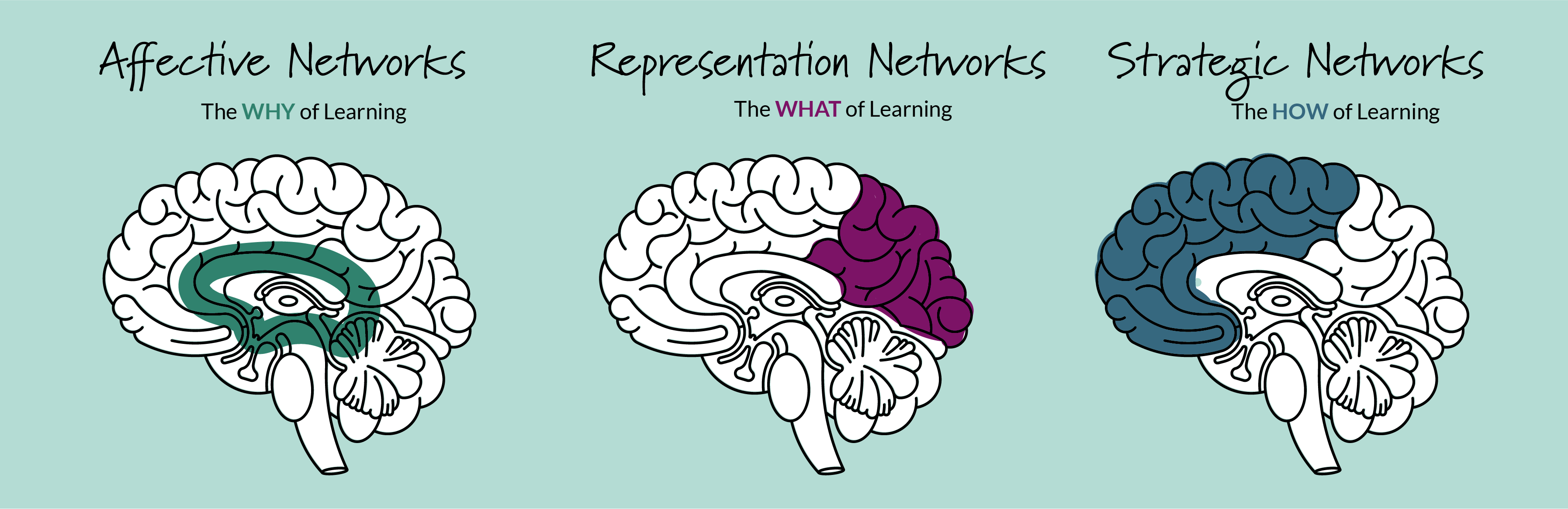 Networks of Brain - the why of learning, the what of learning, the how of learning
