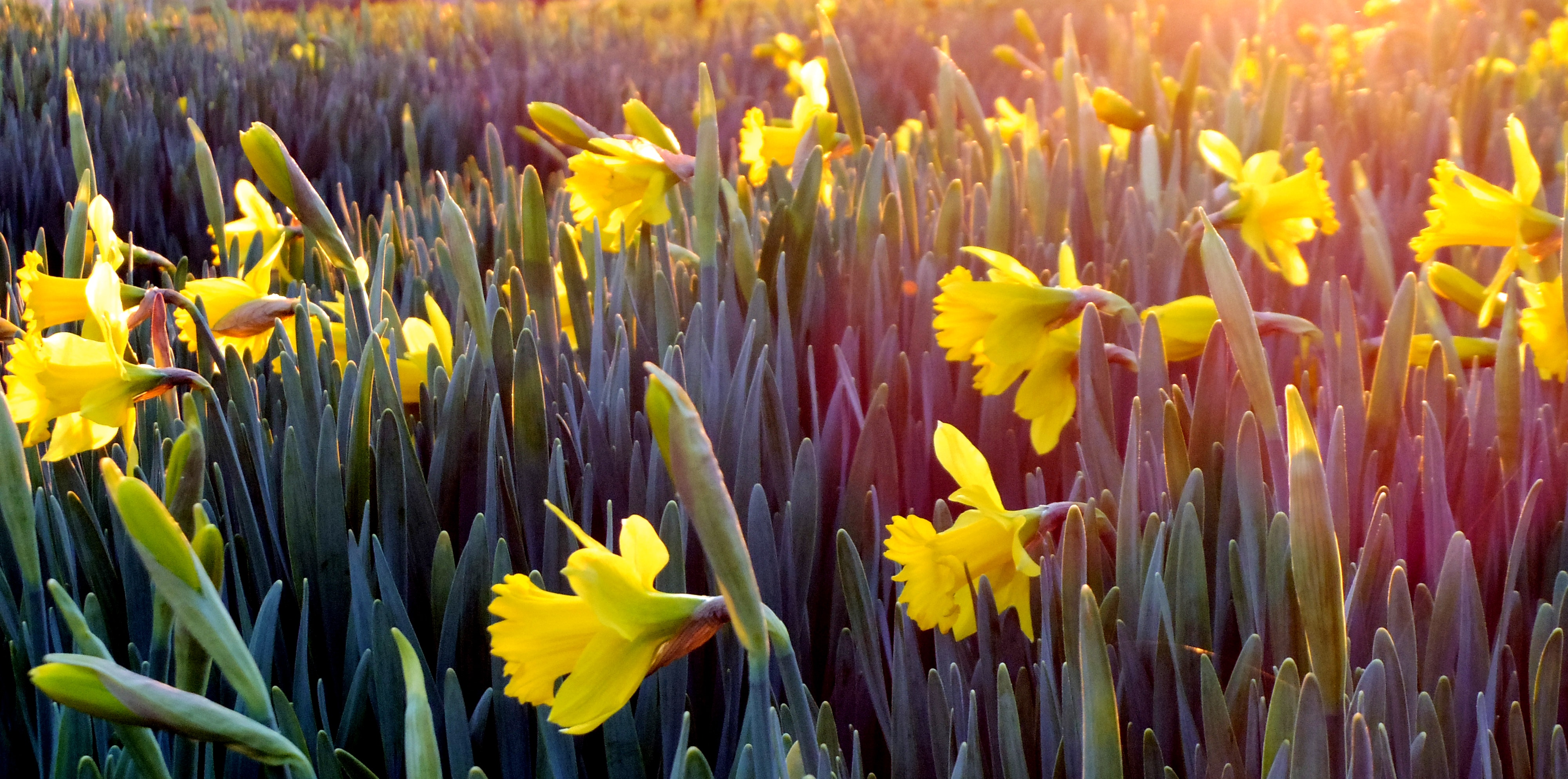 Spring Forward - How to honor and celebrate the spring holidays and traditions
